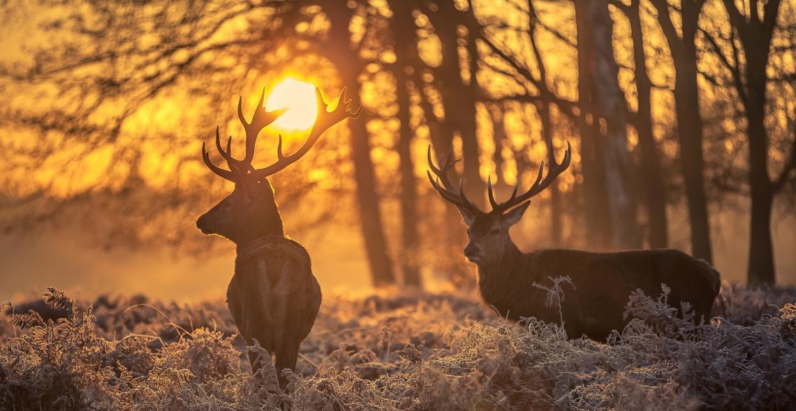 Oslava svátku Svatého Huberta patrona lovu